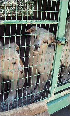 Tra le attivita' illecite, traffico di cuccioli