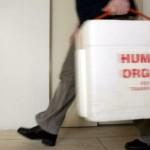 organi-umani