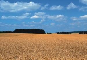 _agricoltura1