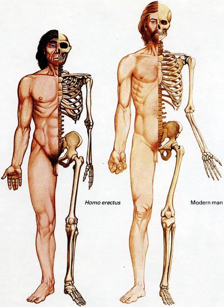neanderthal sapiens