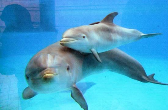 USA: traduttore subacqueo per parlare coi delfini | Il